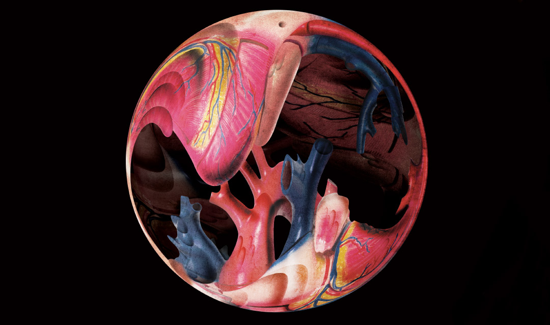 Illustration of the inside of the human heart