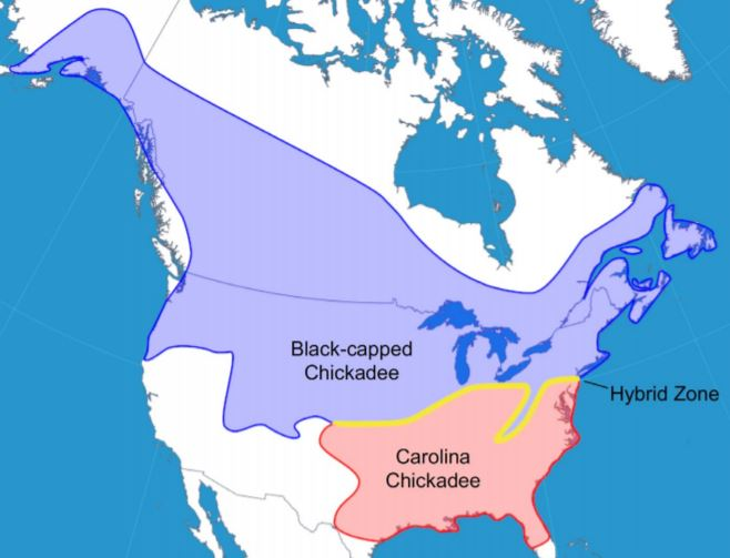Range map of the black-capped chickadee, Carolina chickadee, and approximate location of their hybrid zone