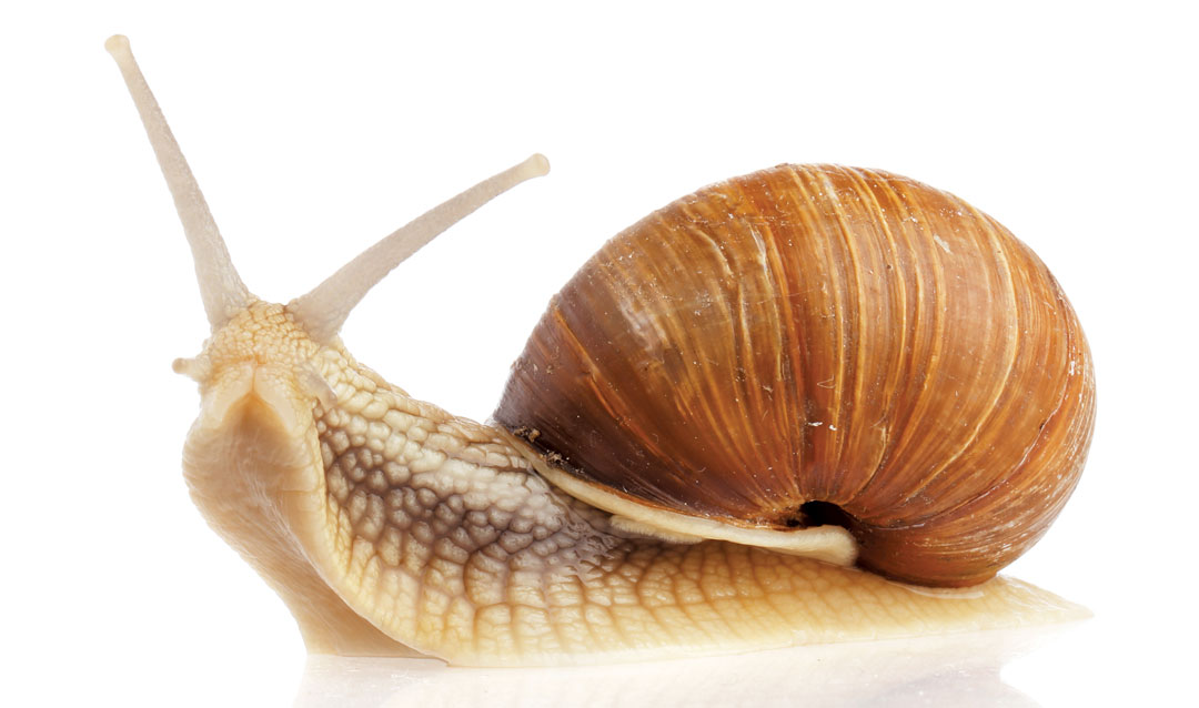 Image result for snail