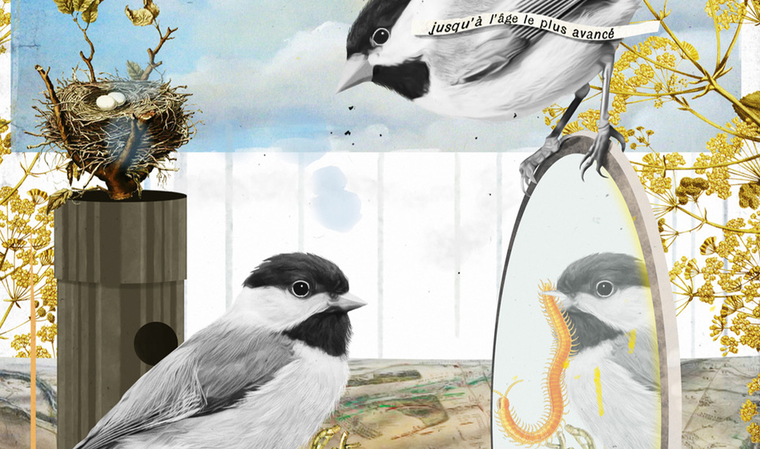 Illustration of chickadees