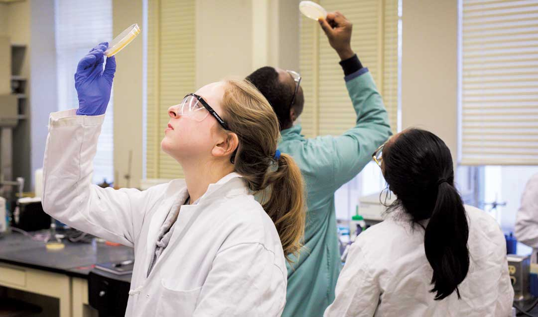 Students hunt for viruses in soil samples