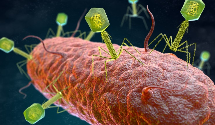 3D illustration of a bacteriophage virus attacking a bacterium.