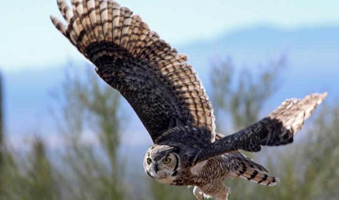 Owl Inspired Design Cuts Wind Turbine Noise News Article Lehigh University